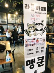 Raccoon Cafe in Hongdae